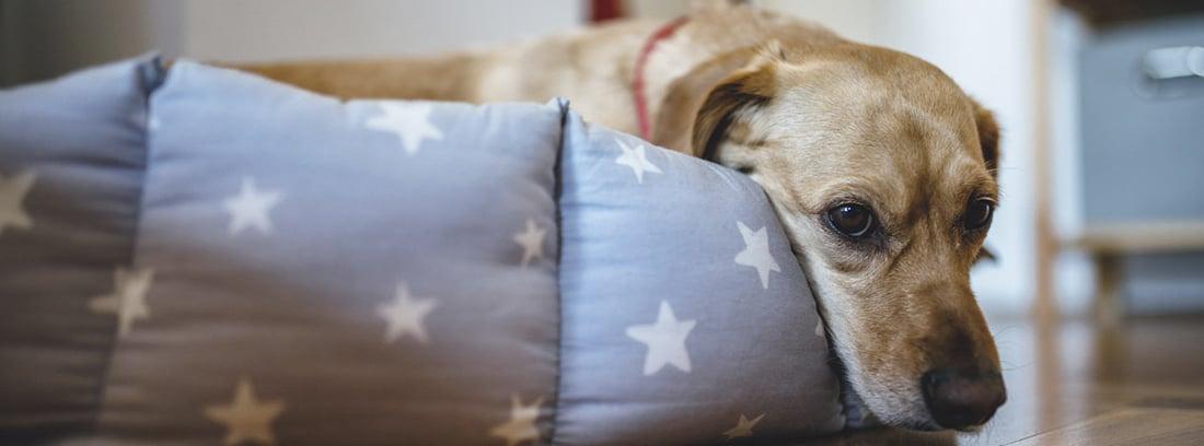 Perra tumbada en su cama con tela de estrellas, con cara decaída