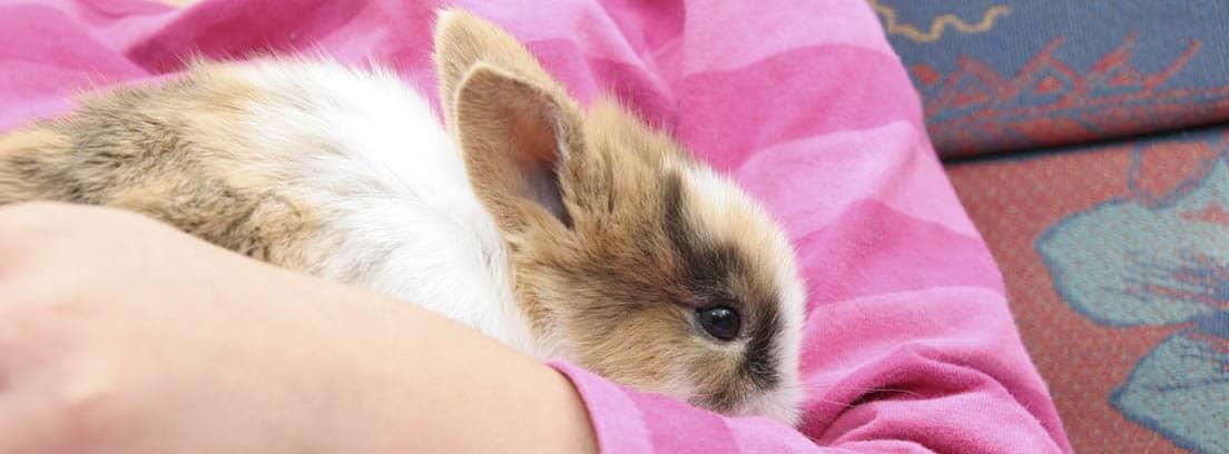 Conejo enano de color blanco y marrón en brazos de una persona con sudadera rosa.