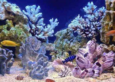 Acuario con peces de colores y vegetación marina.