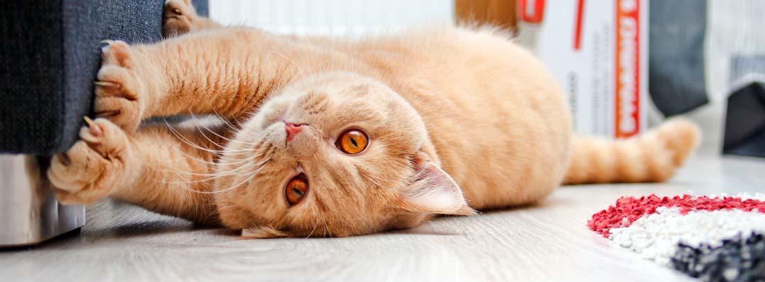 Gato tumbado en el suelo rascando la parte baja de un sofá