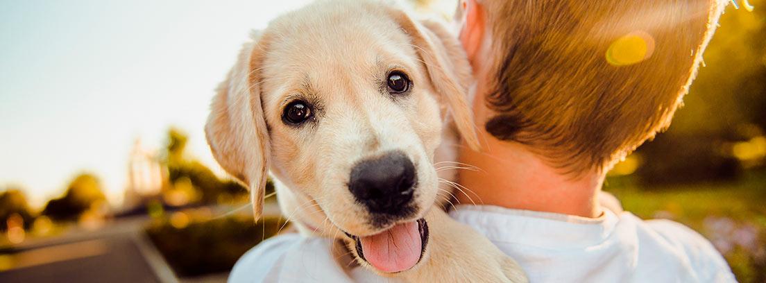Niño de espaldas cogiendo a un perro en brazos
