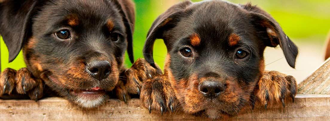 ¿Cuánto cuesta mantener a un perro?