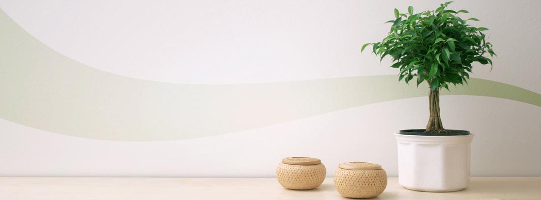 planta ficus salon de casa