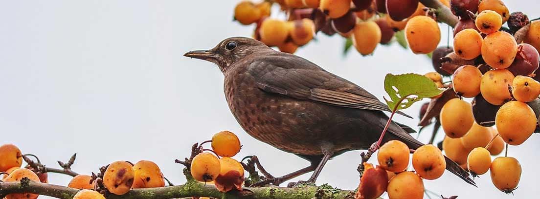 Pájaro posado en una rama de árbol con frutos