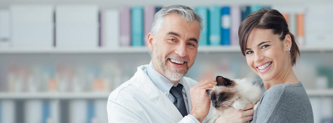 Gato blanco y negro en la consulta del veterinario