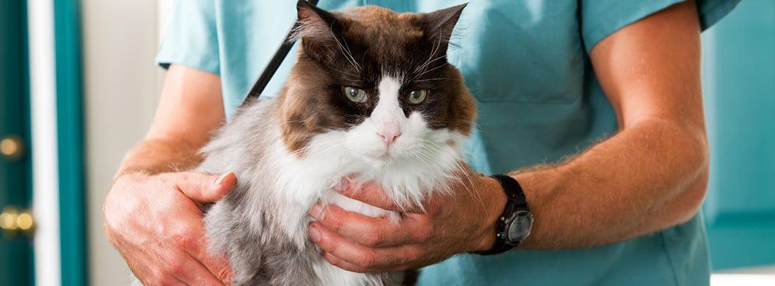 Vacunas en gatos: lo que debes saber