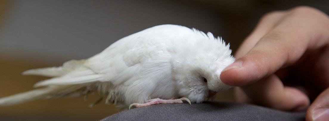 Pájaro blanco sobre la rodilla y junto al dedo de una persona.