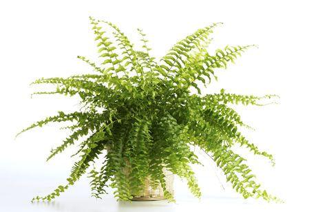 5 Plantas De Exterior Para Todo El Ano Canalhogar - Plantas-verdes-exterior