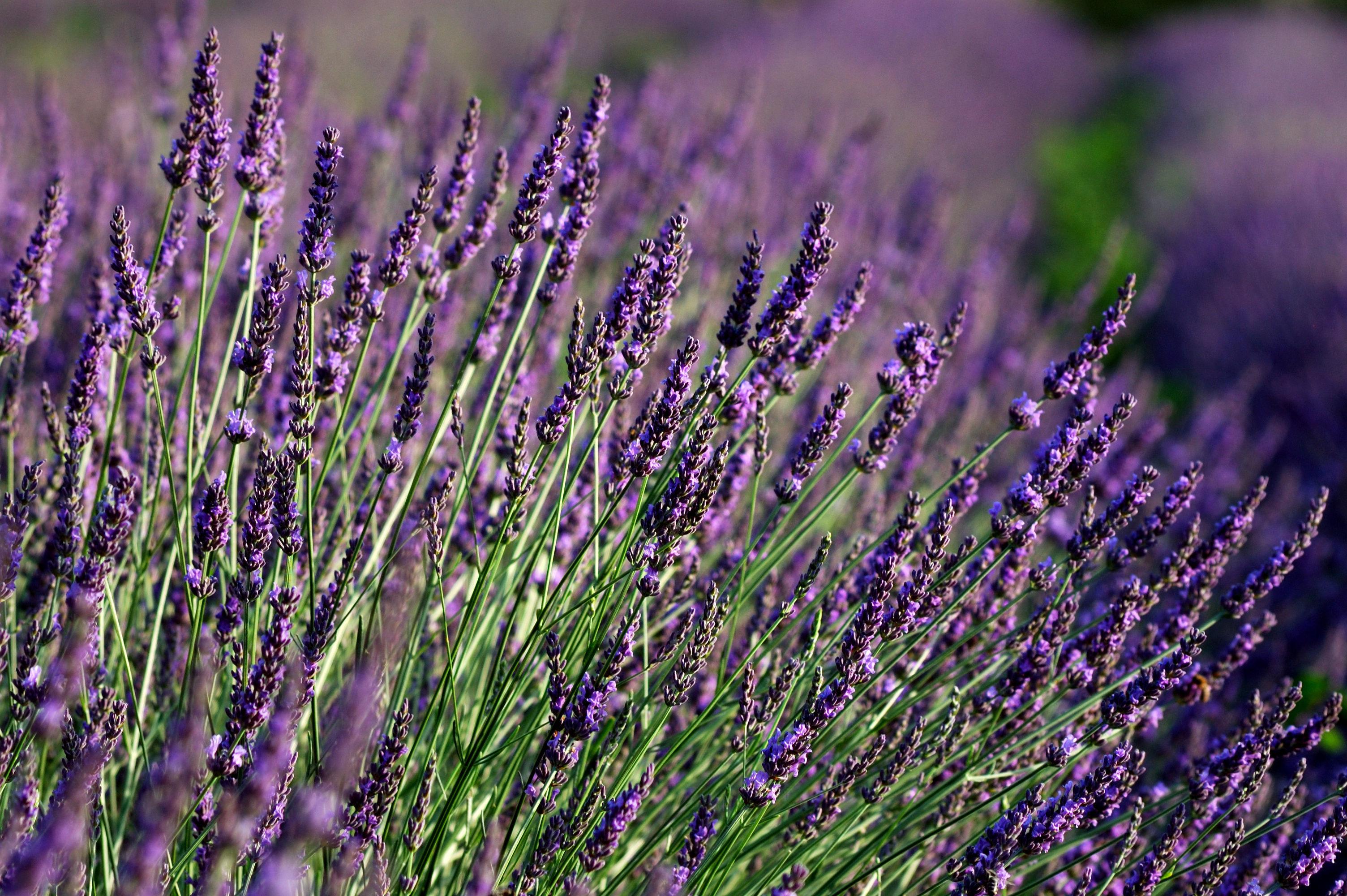 Flores Para Jardineras Exteriores Trendy El Cuidado De Las Plantas - Plantas-de-exteriores-con-flores