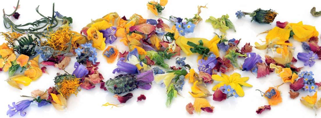Distintos tipos de flores secas sobre una superficie blanca