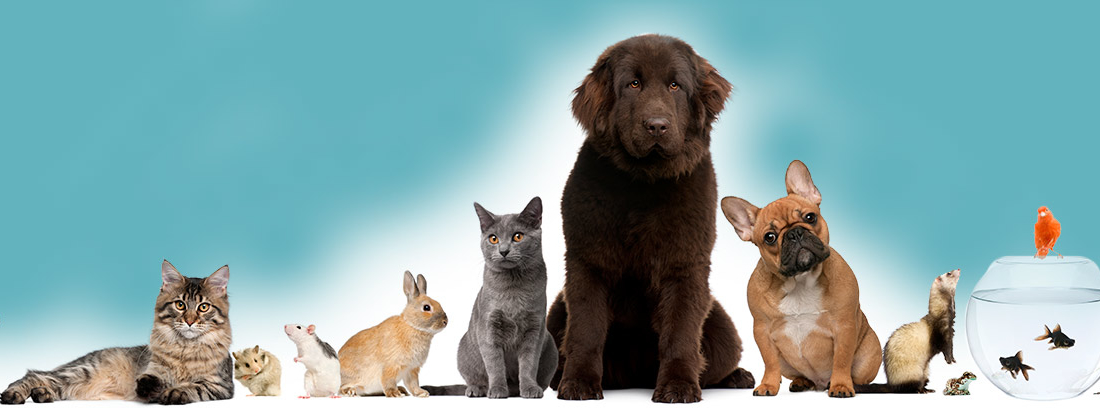 ¿Qué tipo de mascota me conviene más?