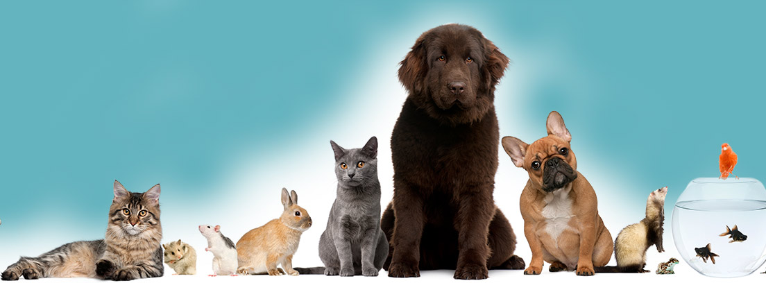 Qué tipo de mascota elegir según las características de tu hogar