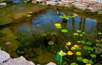 Estanque de peces en un jardín