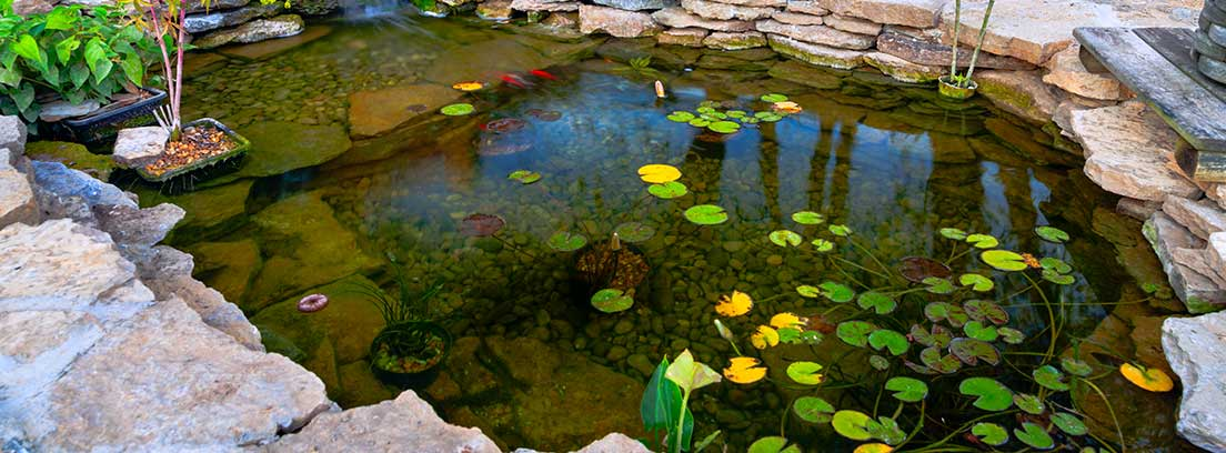 Cuidados espec ficos para un estanque de peces canalhogar for Peces para limpiar estanques