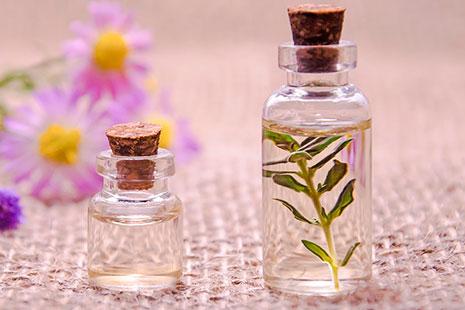 dos frascos pequeños uno más grande con una planta dentro