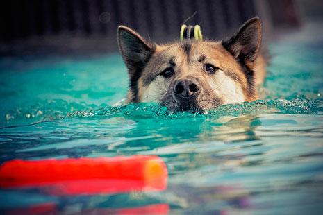 Perro nadando asomando la cabeza fuera del agua