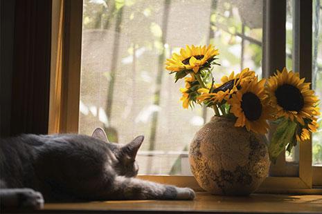 Gato de espaldas junto a jarrón redondo con grandes flores amarillas