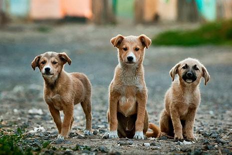 Tres perros sentados mirando a cámara
