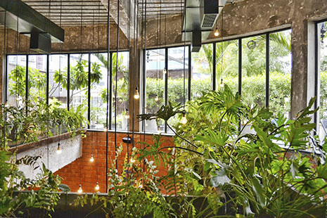 Plantas diferentes con bombillas y ventanas en el fondo