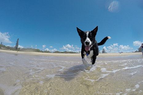 Perro bañándose en una playa