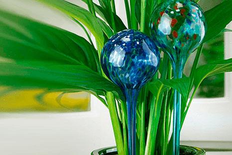 Dos globos de riego gradual azules clavados en una maceta con una planta