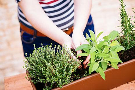 Manos de mujer que depositan tierra en una maceta con plantas aromáticas