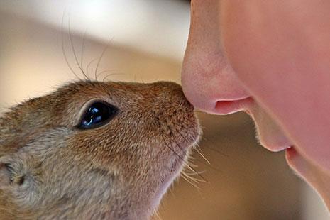 Ardilla y persona juntando la nariz