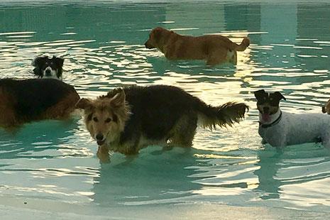Parques acuáticos para perros en Madrid