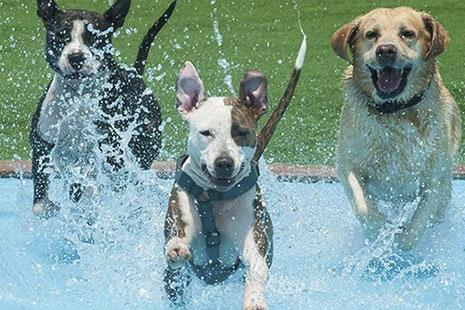Parques acuáticos para perros en Barcelona