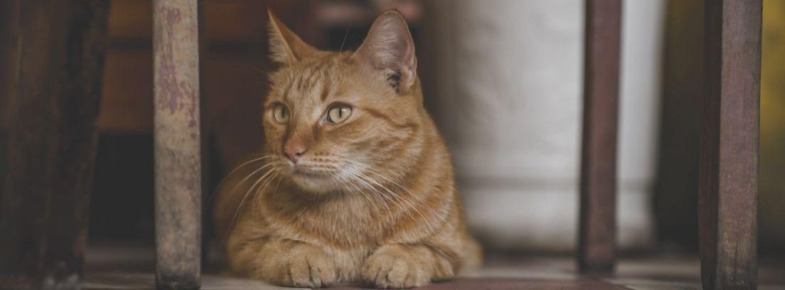 10 consejos para tener un gato en un piso