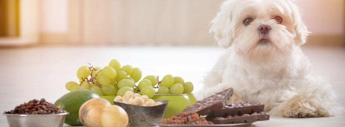 Vista cenital de un perro mirando al foco con un plato lleno de comida en el suelo