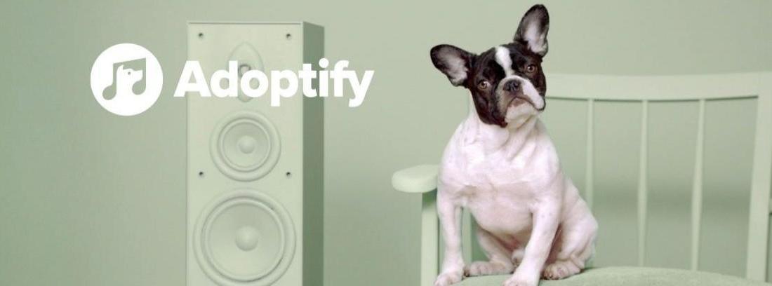 Perro sentado en una silla con un altavoz al lado