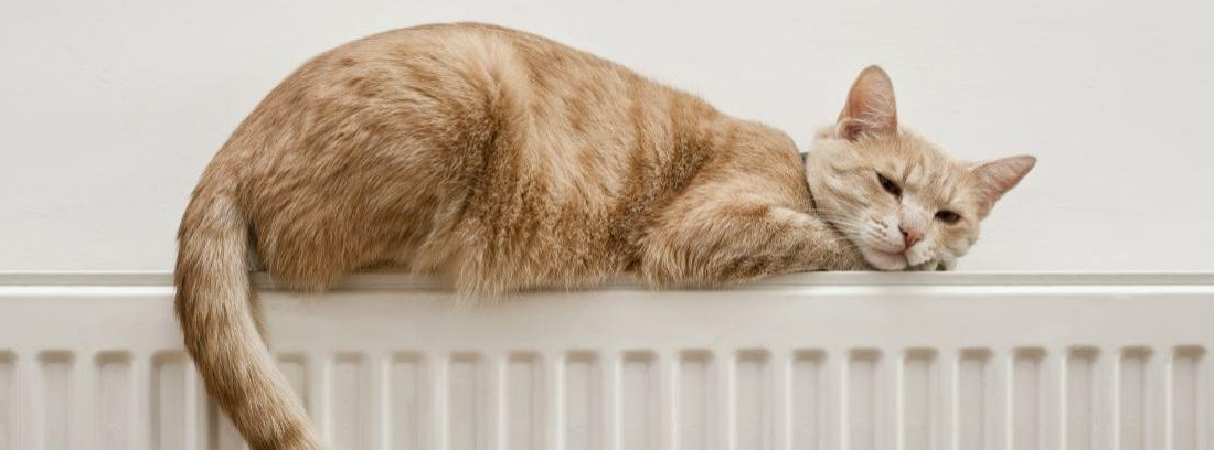 Un gato marrón recostado encima de un radiador