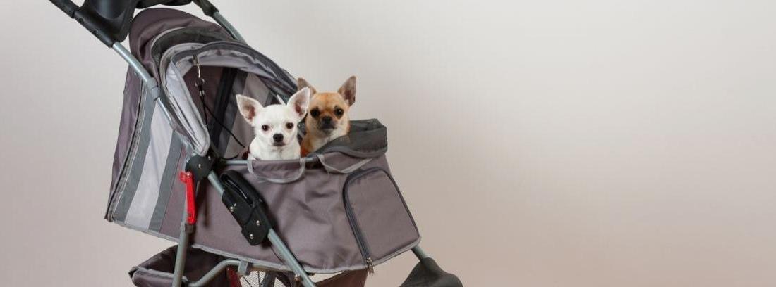 Carritos de paseo para perros