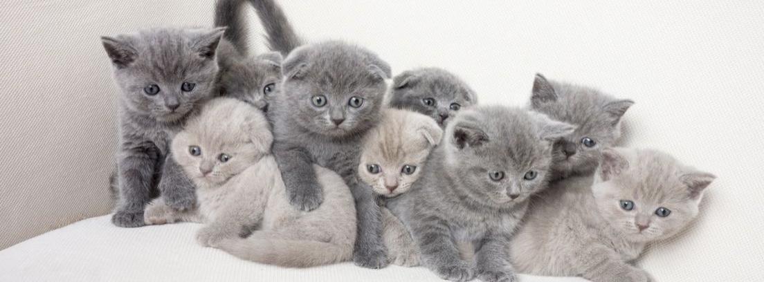 Cuidados gatitos