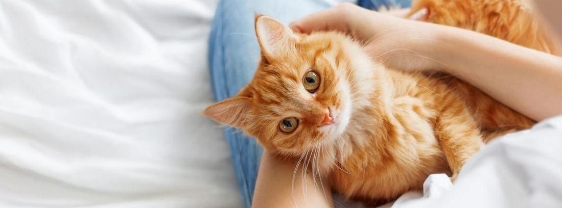 Mujer despaldas con gato apoyando la cabeza en su hombro