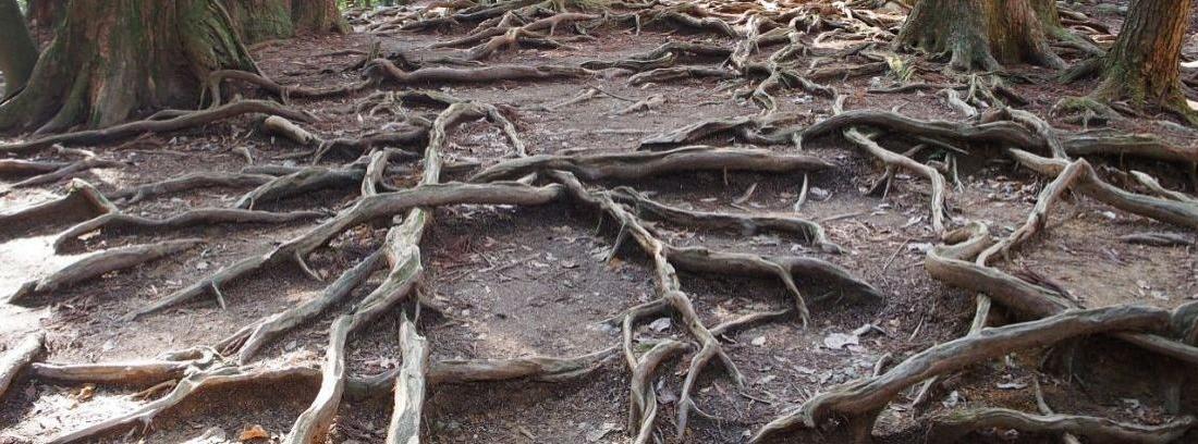 Problemas con raíces de árboles