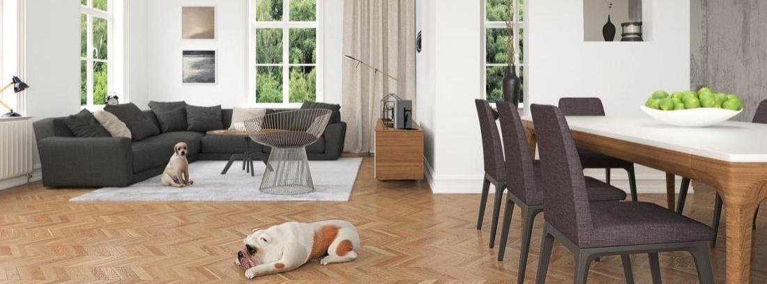 Cómo evitar que salte la alarma si tenemos mascotas en casa