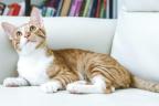 un gato entre cortinas