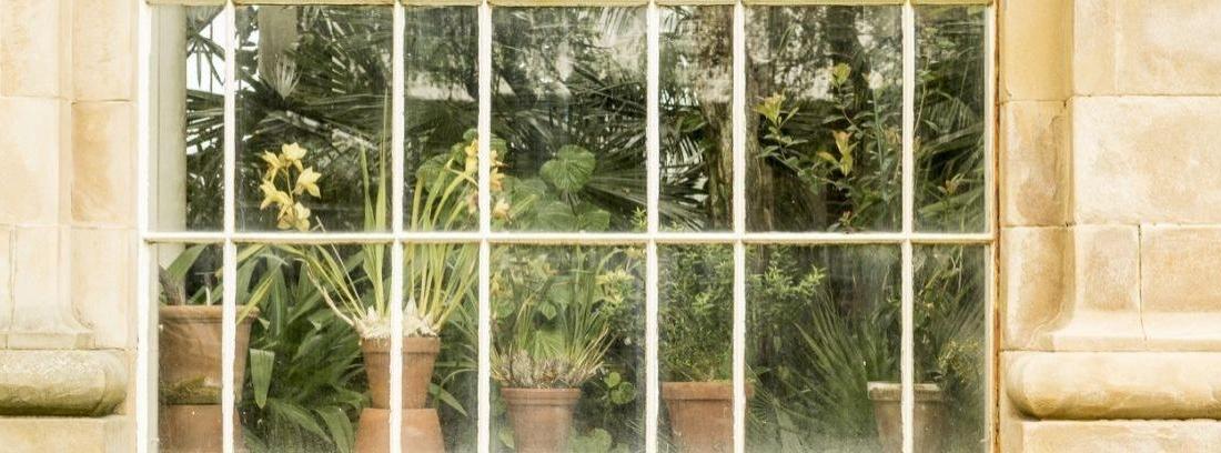 Cómo hacer tu propio jardín botánico