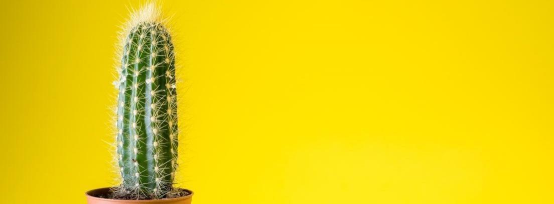 Centros de mesa hechos con cactus