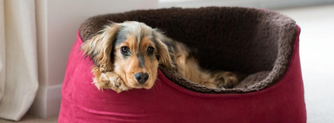 perro dentro de un palé
