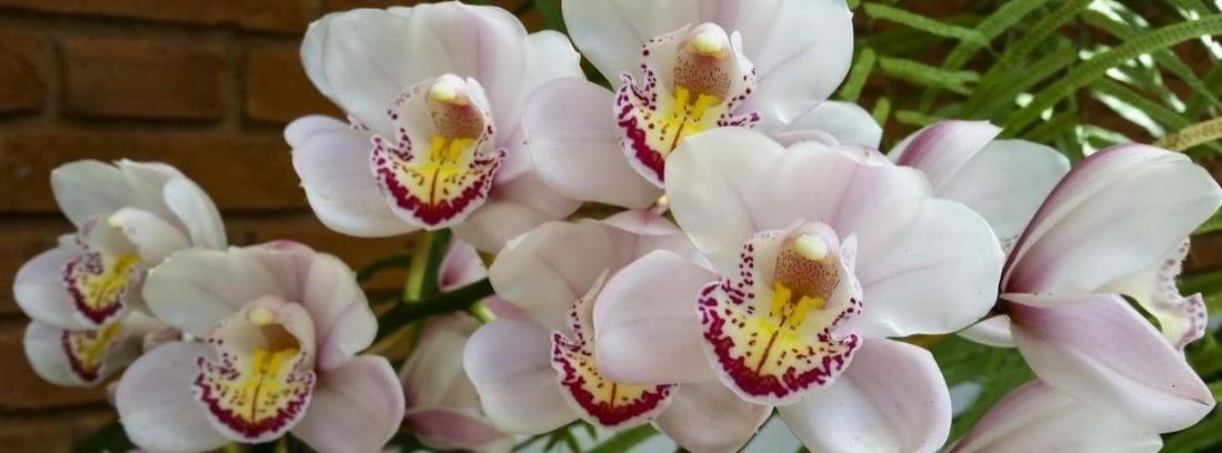 Orquídeas en cortezas de árbol