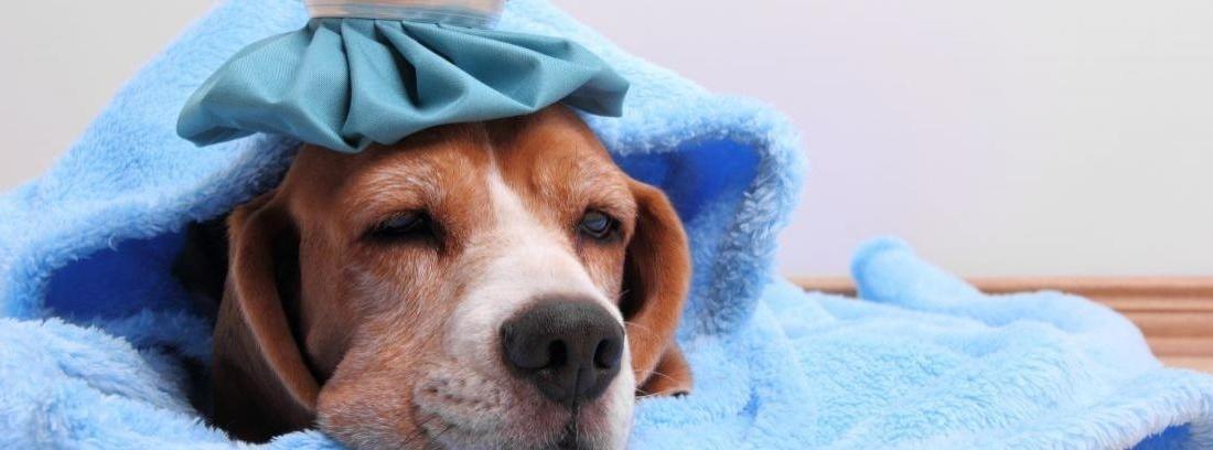 enfermedades en perros y gatos