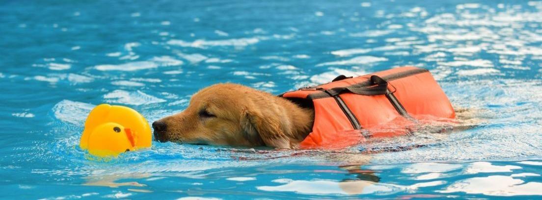 Un perro corriendo en el agua