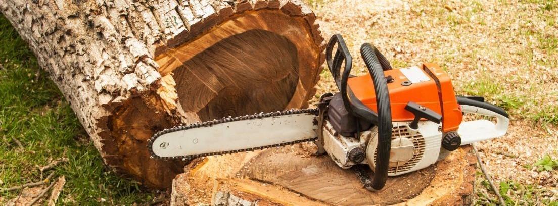 Cómo talar los árboles del jardín