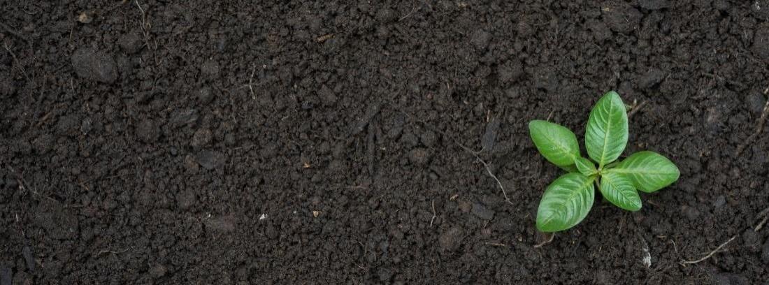 8116a7c99 Ver imagen más grande Consejos para abonar tus plantas en verano