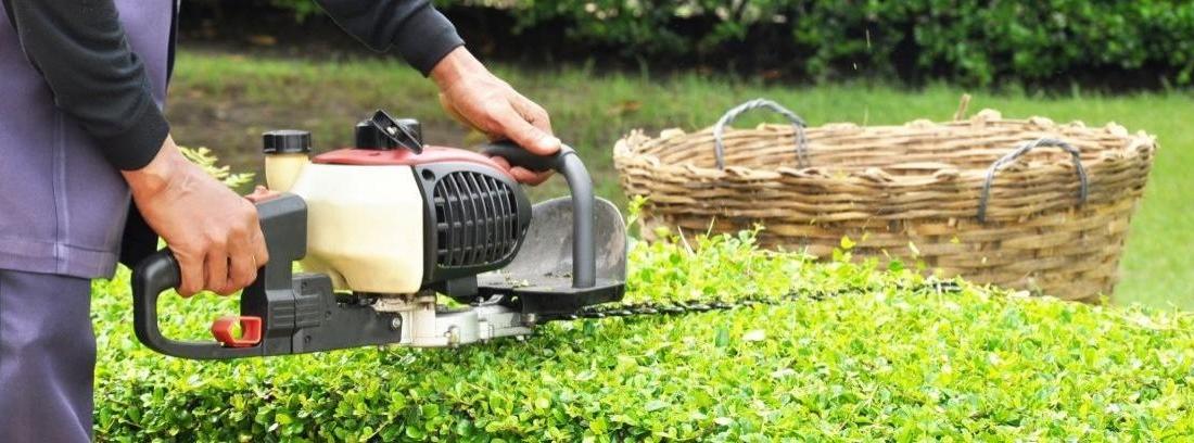 mujer arreglando el jardín