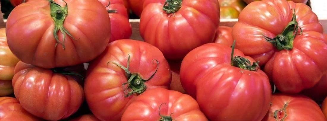 Cómo regar tomates