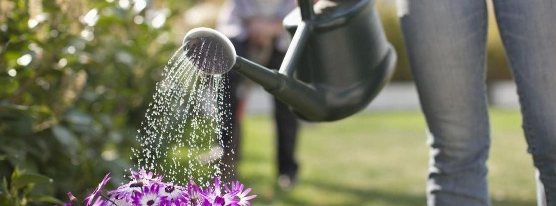 ¿Cuál es la mejor hora para regar las plantas?